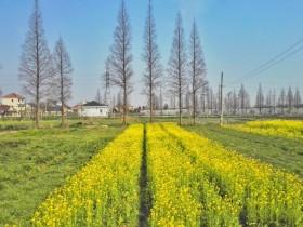 四时节气养生知识:春季如何养生